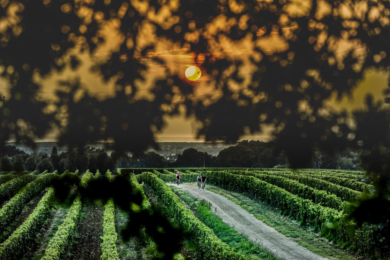 10006-tuscany_19_1